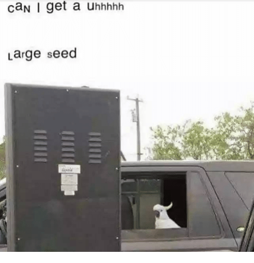 Can, Seed, and Get: caN I get a uhhhhh  Large seed