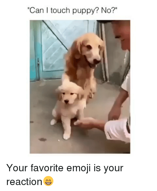 Can I Touch Puppy? No? Your Favorite Emoji Is Your Reaction