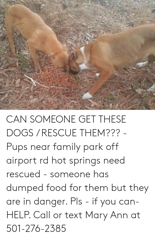 Dogs, Family, and Food: CAN SOMEONE GET THESE DOGS / RESCUE THEM??? - Pups near family park off airport rd hot springs need rescued - someone has dumped food for them but they are in danger. Pls - if you can- HELP. Call or text Mary Ann at 501-276-2385