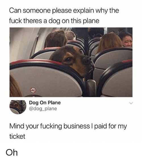 Fucking, Funny, and Business: Can someone please explain why the  fuck theres a dog on this plane  Dog On Plane  @dog plane  Mind your fucking business I paid for my  ticket Oh