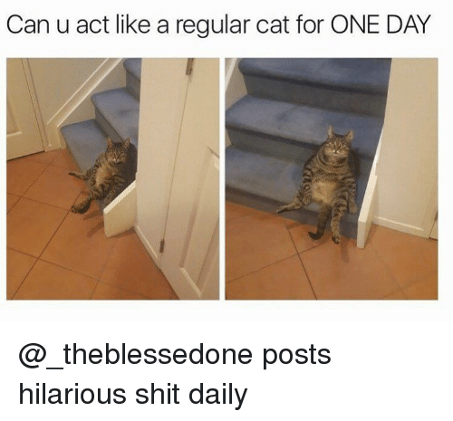 Funny, Shit, and Girl Memes: Can u act like a regular cat for ONE DAY @_theblessedone posts hilarious shit daily