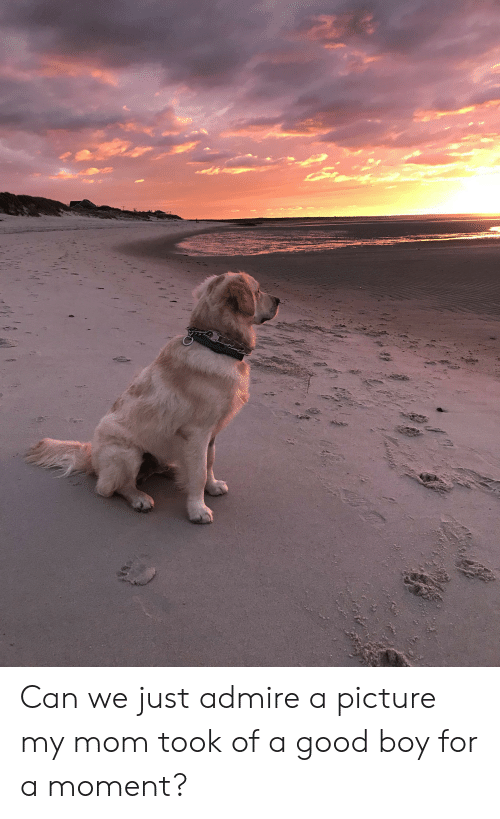 Good, Mom, and A Picture: Can we just admire a picture my mom took of a good boy for a moment?