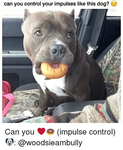 Memes, Control, and 🤖: can you control your impulses like this dog? Can you ❤️🍩 (impulse control) 🐶: @woodsieambully