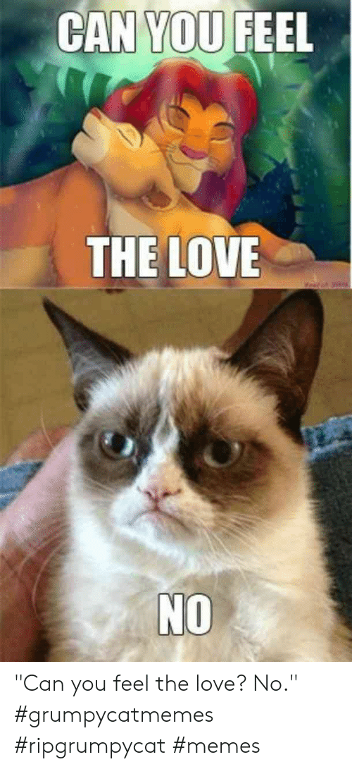 25 Best Memes About Can You Feel The Love Can You Feel The