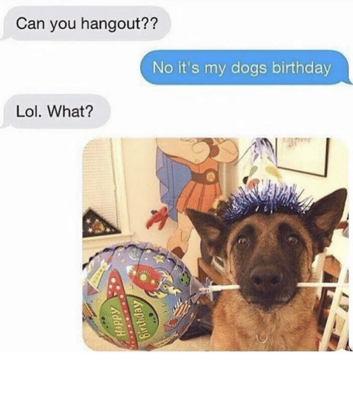 Birthday, Cute, and Dogs: Can you hangout??  No it's my dogs birthday  Lol. What? So cute - might delete later