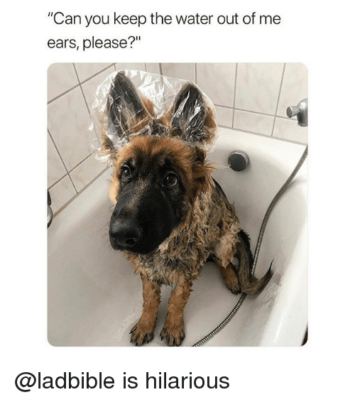 """Funny, Water, and Hilarious: """"Can you keep the water out of me  ears, please?"""" @ladbible is hilarious"""