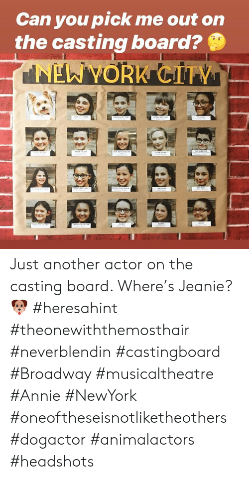 Memes, New York, and Annie: Can you pick me out on  the casting board?  NEW YORK CITY  ㄈ Just another actor on the casting board. Where's Jeanie? 🐶  #heresahint #theonewiththemosthair #neverblendin #castingboard #Broadway #musicaltheatre #Annie #NewYork #oneoftheseisnotliketheothers #dogactor #animalactors #headshots