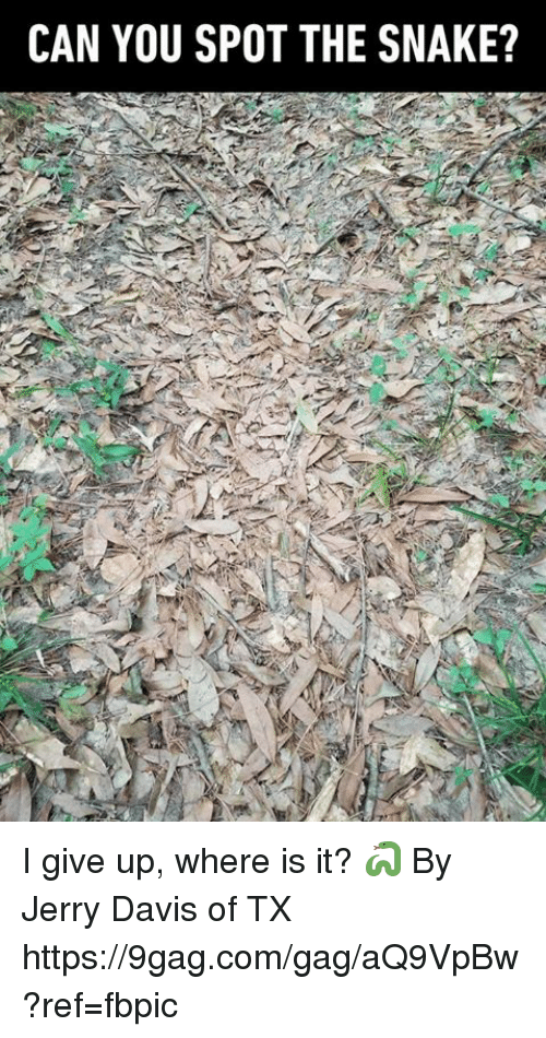 9gag, Dank, and Snake: CAN YOU SPOT THE SNAKE? I give up, where is it?  🐍  By Jerry Davis of TX https://9gag.com/gag/aQ9VpBw?ref=fbpic