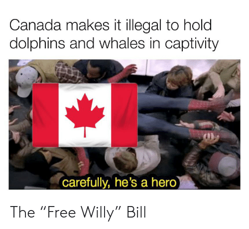 "Canada, Dolphins, and Dank Memes: Canada makes it illegal to hold  dolphins and whales in captivity  carefully, he's a hero) The ""Free Willy"" Bill"
