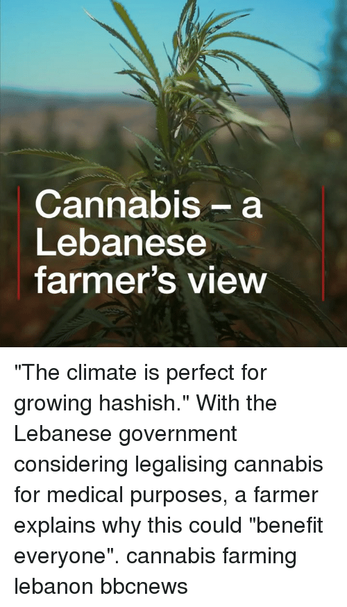 """Memes, Lebanese, and Farming: Cannabis- a  Lebanese  farmer's view """"The climate is perfect for growing hashish."""" With the Lebanese government considering legalising cannabis for medical purposes, a farmer explains why this could """"benefit everyone"""". cannabis farming lebanon bbcnews"""