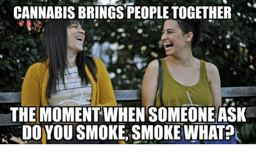 Memes, Cannabis, and 🤖: CANNABIS BRİNGSPEOPLE TOGETHER .  THE MOMENT WHEN SOMEONE ASK  DO YOU SMOKE, SMOKE WHAT?