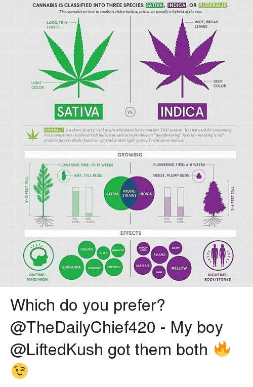 "Love, Memes, and Meaning: CANNABIS IS CLASSIFIED INTO THREE SPECIES: SATIVA, INDICA, OR RUDERALIS  The cannabis we love to smoke is eitherindica, sativa, or usually a hybrid oftke two.  WIDE, BROAD  LONG, THIN  LEAVES  LEAVES  IGHT  COLOR  DEEP  COLOR  SATIVA  INDICA  VS  RUDERALIS is a short, hearty, wild strain with fewer leaes and low THC content. It is not used for consoning  lut is sometimes crosshred with indicas or sativas to produce an autofloweing""hybrid-meaning it will  produce fiowers (ods) based on age ratlher than light cles like sativas or indicas  GROWING  -FLOWERING TIME: 10-16 WEEKS  FLOWERING TIME: 6-8 WEEKS  AIRY, TALL BUDS  DENSE, PLUMP BUDS  HYBRID  STRAINS INDICA  SATIVA STRAINS  THO  LEVEL LEVELS  CeD  THO  LEVEL LEVEL  EFFECTS  CREATIVE  RELAXED  CAREFREE  EUPHORIA SOCIABLE CHEERFUL  MELLOW  DAYTIME  MIND/HIGH  NIGHTIME:  BODY/STONED Which do you prefer? @TheDailyChief420 - My boy @LiftedKush got them both 🔥😉"