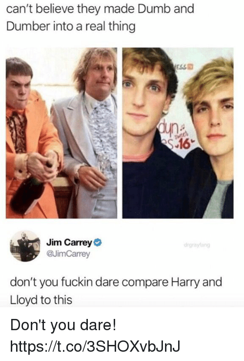 Dumb, Funny, and Jim Carrey: can't believe they made Dumb and  Dumber into a real thing  S 16  Jim Carrey  @JimCarrey  drgrayfang  don't you fuckin dare compare Harry and  Lloyd to this Don't you dare! https://t.co/3SHOXvbJnJ
