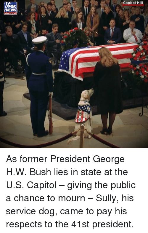 Memes, George H. W. Bush, and 🤖: Capitol Hill  OX  EWS  channel As former President George H.W. Bush lies in state at the U.S. Capitol – giving the public a chance to mourn – Sully, his service dog, came to pay his respects to the 41st president.