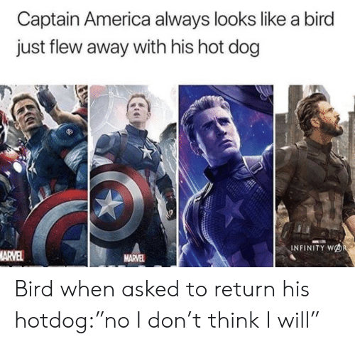 """America, Infinity, and Marvel: Captain America always looks like a bird  just flew away with his hot dog  INFINITY WOR  MARVEL  MARVEL Bird when asked to return his hotdog:""""no I don't think I will"""""""