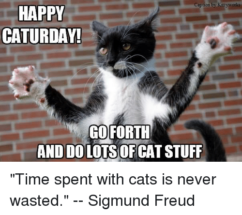 Image result for happy caturday