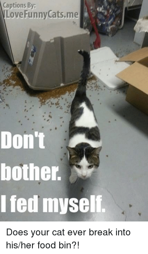 Image of: Pics Funny Memes And Captioned Captions By Love Funny Cats Me Don Funny Grins Captions By Love Funny Cats Me Dont Bother Fed Myself Does Your