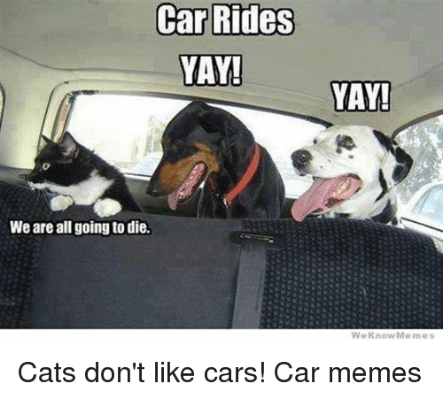 Car Rides Yay We Are All Going To Die Yay We Know Cats Don T Like Cars Car Memes Cars Meme On Me Me Find and save sarcastic memes | funny in a dickish kind of way. meme