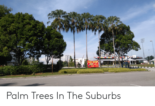 Trees, Car Wash, and Car: CAR WASH  OPEN  7AM - 7PM  MAST Palm Trees In The Suburbs
