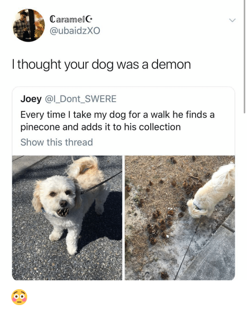 Girl, Time, and Thought: CaramelG  @ubaidzXO  l thought your dog was a demon  Joey @l_Dont_SWERE  Every time I take my dog for a walk he finds a  pinecone and adds it to his collectioin  Show this thread 😳