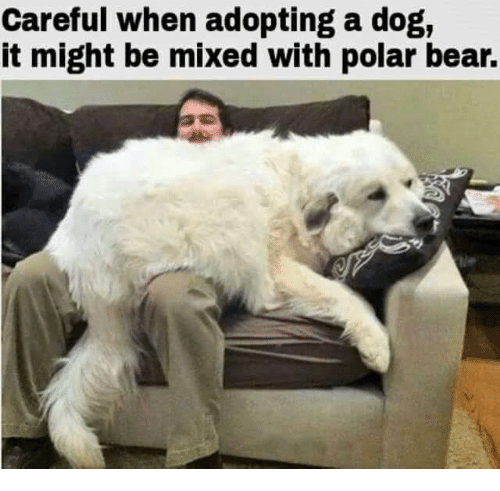 Careful When Adopting A Dog It Might Be Mixed With Polar Bear Meme