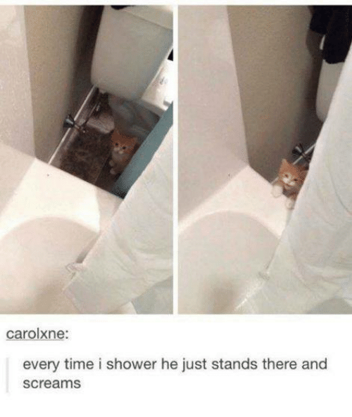 Carolxne Every Time I Shower He Just Stands There and Screams | Meme ...