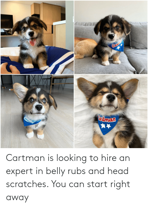 Head, Looking, and Can: Cartman is looking to hire an expert in belly rubs and head scratches. You can start right away