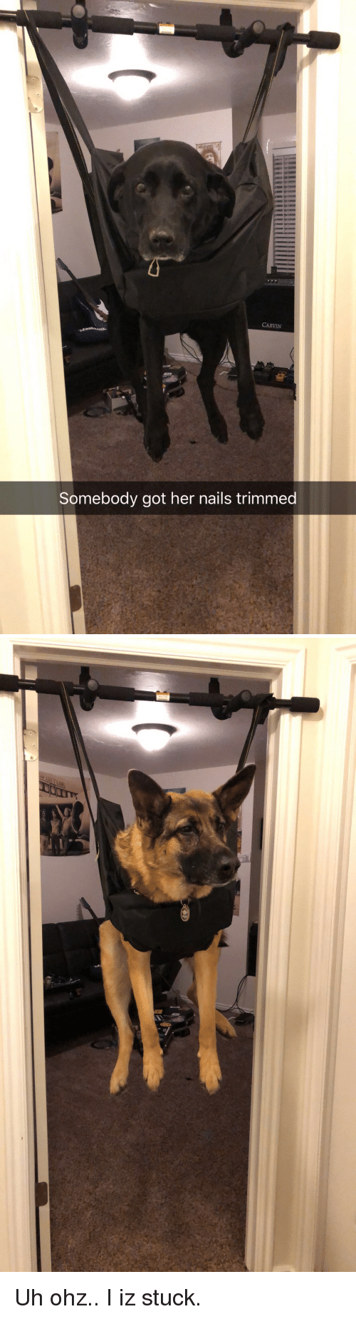 Funny, How To, and Nails: CARVIN  Somebody got her nails trimmed Uh ohz.. I iz stuck.