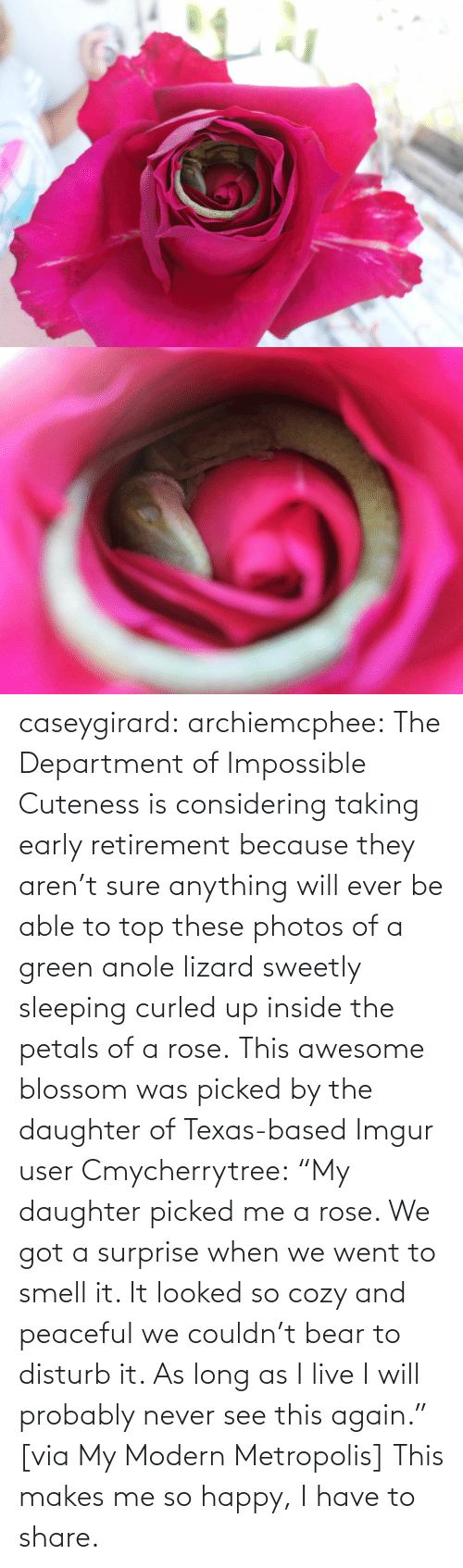 "Smell, Tumblr, and Wikipedia: caseygirard:  archiemcphee:   The Department of Impossible Cuteness is considering taking early retirement because they aren't sure anything will ever be able to top these photos of a green anole lizard sweetly sleeping curled up inside the petals of a rose. This awesome blossom was picked by the daughter of Texas-based Imgur user Cmycherrytree: ""My daughter picked me a rose. We got a surprise when we went to smell it. It looked so cozy and peaceful we couldn't bear to disturb it. As long as I live I will probably never see this again."" [via My Modern Metropolis]   This makes me so happy, I have to share."