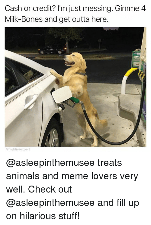 Animals, Bones, and Meme: Cash or credit? I'm just messing. Gimme4  Milk-Bones and get outta here.  @highfiveexpert @asleepinthemusee treats animals and meme lovers very well. Check out @asleepinthemusee and fill up on hilarious stuff!