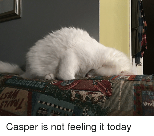 Casper, Today, and Feeling