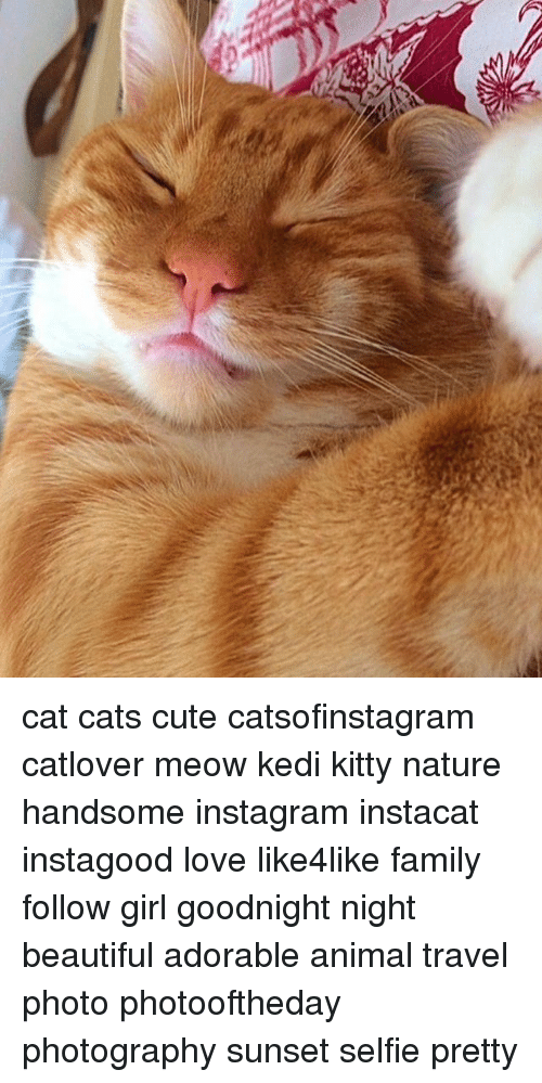 Beautiful, Cats, and Cute: cat cats cute catsofinstagram catlover meow kedi kitty nature handsome instagram instacat instagood love like4like family follow girl goodnight night beautiful adorable animal travel photo photooftheday photography sunset selfie pretty