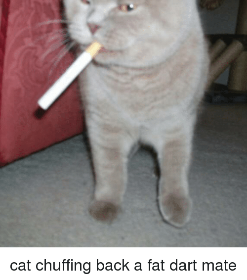 Cat Chuffing Back A Fat Dart Mate Cats Meme On Meme