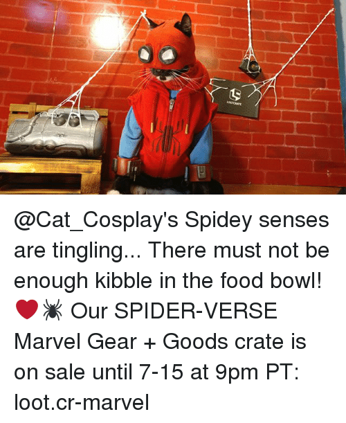 Food, Memes, and Spider: @Cat_Cosplay's Spidey senses are tingling... There must not be enough kibble in the food bowl! ❤️🕷 Our SPIDER-VERSE Marvel Gear + Goods crate is on sale until 7-15 at 9pm PT: loot.cr-marvel