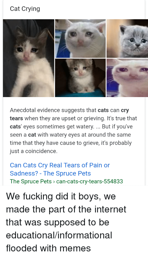 Cats, Crying, and Internet: Cat Crying  Anecdotal evidence suggests that cats can cry  tears when they are upset or grieving. It's true that  cats' eyes sometimes get watery.... But if you've  seen a cat with watery eyes at around the same  time that they have cause to grieve, it's probably  just a coincidence.  Can Cats Cry Real Tears of Pain or  Sadness? - The Spruce Pets  The Spruce Pets > can-cats-cry-tears-5548323