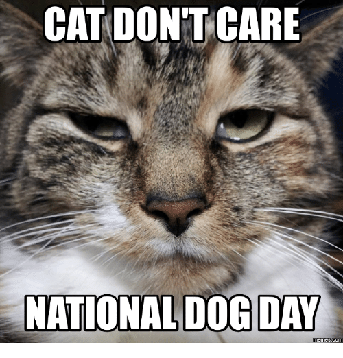 cat dont care national dog day memes com 16194328 cat don't care national dog day memes com dog meme on me me