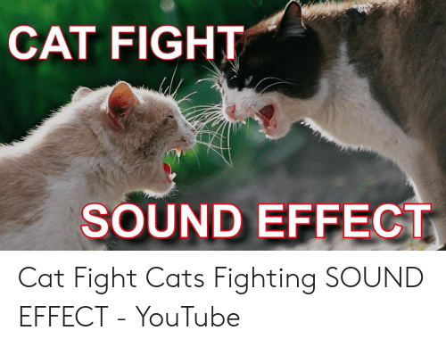 CAT FIGHT SOUND EFFECT Cat Fight Cats Fighting SOUND EFFECT