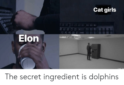 Girls, Dolphins, and Cat: Cat girls  Elon  2018-05-21 10:23PM The secret ingredient is dolphins