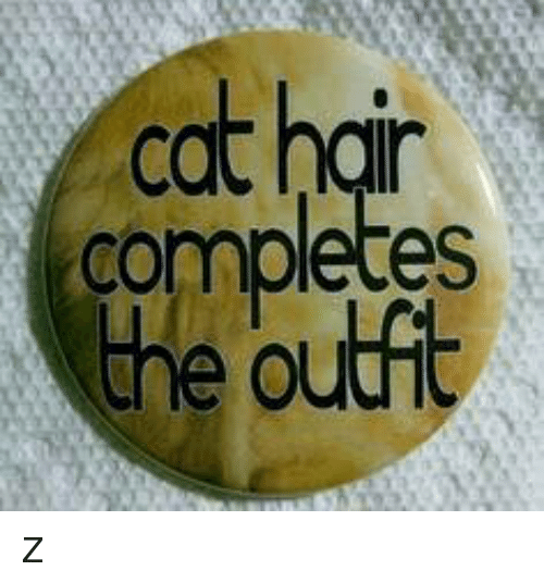 Image result for cat hair completes the outfit
