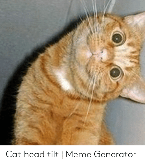 Cat Head Tilt Meme Generator Head Meme On Meme