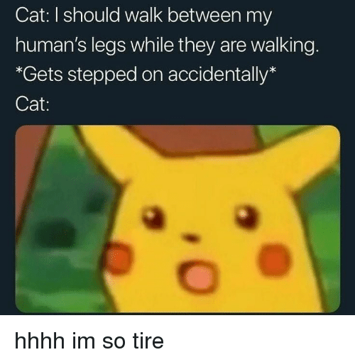 Cat, They, and Humans: Cat: I should walk between my  human's legs while they are walking.  *Gets stepped on accidentally*  Cat: hhhh im so tire