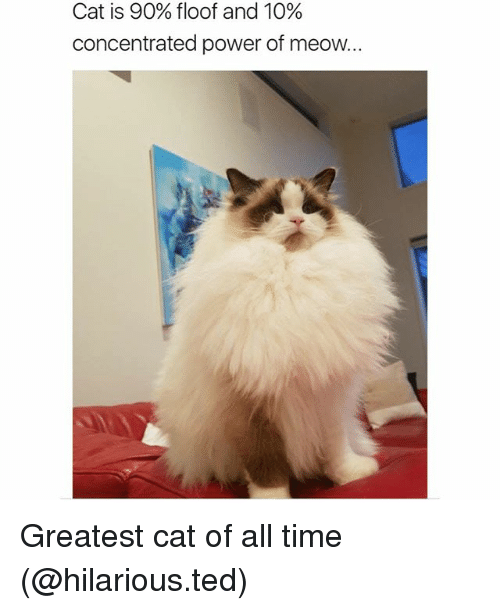 Funny, Ted, and Power: Cat is 90% floor and 10%  concentrated power of meow. Greatest cat of all time (@hilarious.ted)
