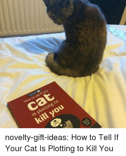 Tumblr, Blog, and How To: cat  is plotting to  kill you novelty-gift-ideas: How to Tell If Your Cat Is Plotting to Kill You