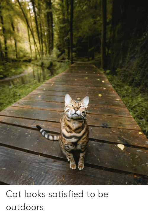 Cat, Outdoors, and Satisfied: Cat looks satisfied to be outdoors