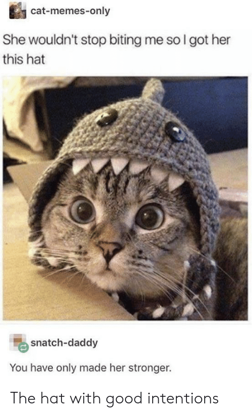 Memes, Good, and Got: cat-memes-only  She wouldn't stop biting me so I got her  this hat  snatch-daddy  You have only made her stronger. The hat with good intentions
