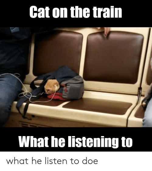 Doe, Train, and Cat: Cat on the train  What he listening to what he listen to doe