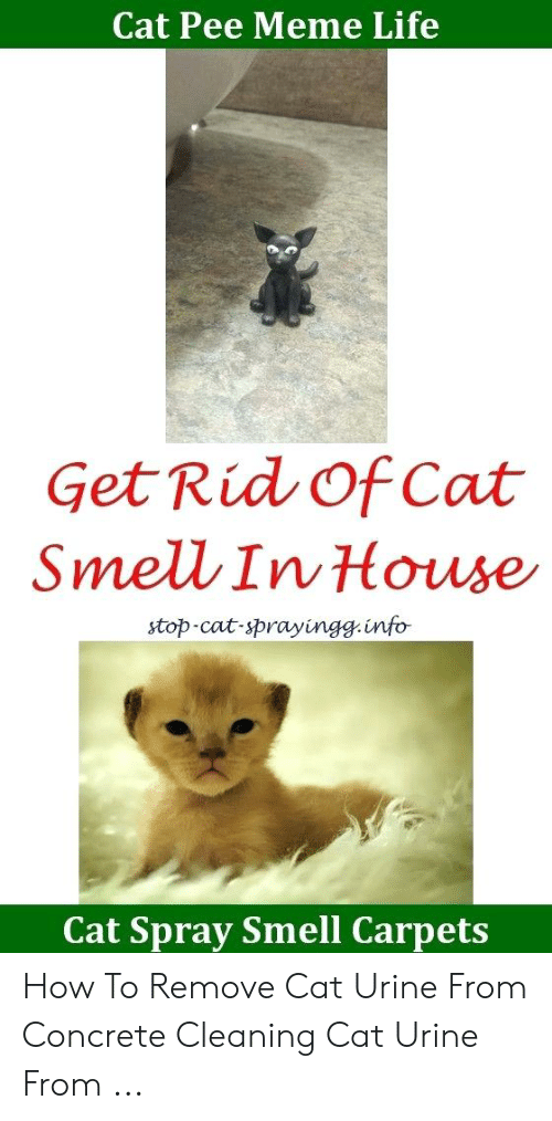 Cat Pee Meme Life Get Rid of Cat Smell in House Stop-Cat