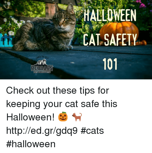 Petplan's top tips for your pets this Halloween! | Pet Wellbeing ...