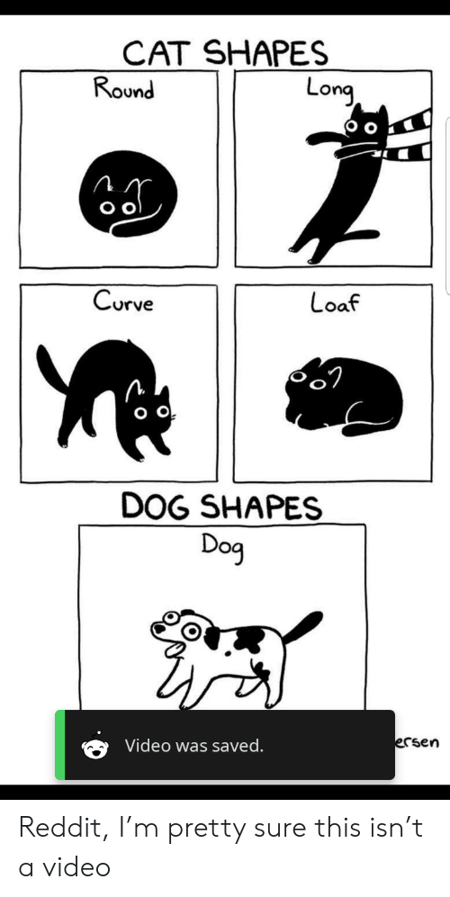 CAT SHAPES Round Long Curve Loaf O O DOG SHAPES Dog Video Was Saved