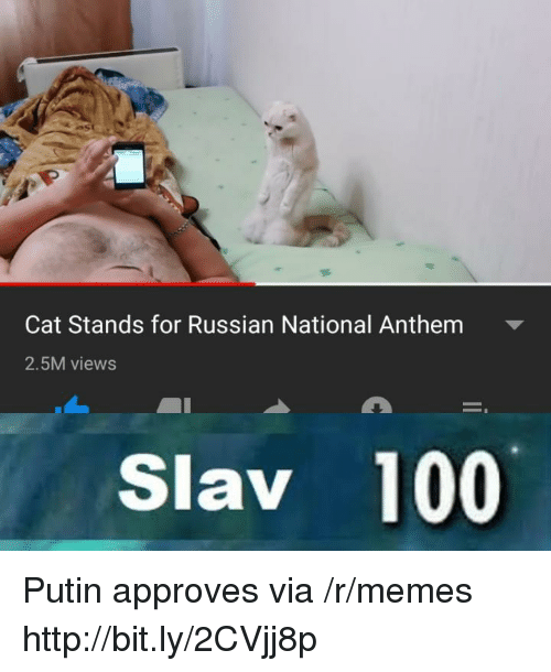 Cat Stands for Russian National Anthem 25M Views Slav 100 Putin